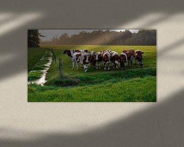 Koeienkransje van Robert Smink