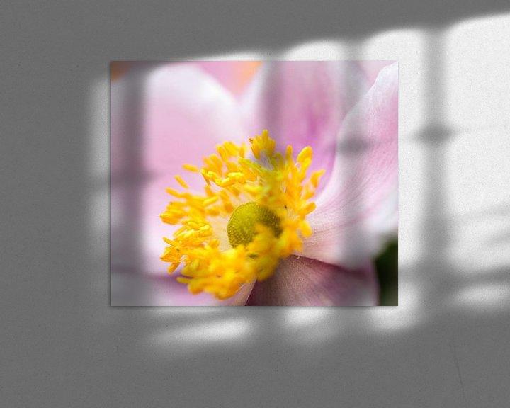 Sfeerimpressie: Close-up Clematis van Eddie Meijer