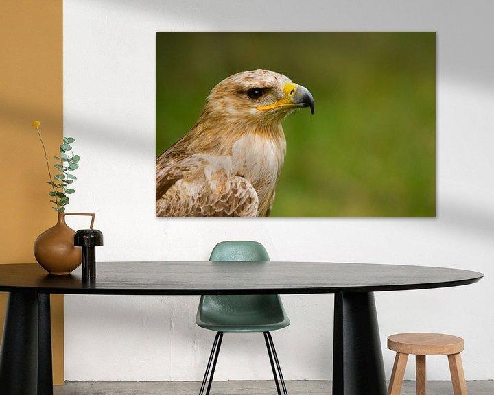 Sfeerimpressie: Eagle-Portrait (Aquila rapax) van Ursula Di Chito