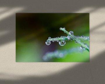 Waterdrops van Ursula Di Chito
