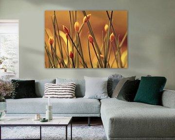 Allium sur Violetta Honkisz