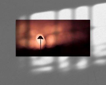 In the spotlight van Richard Guijt Photography