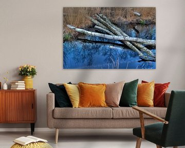 Berkenbomen in natuurgebied bij Winterswijk van Tonko Oosterink
