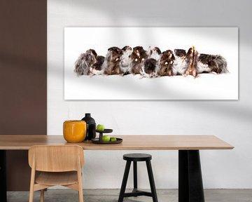 Hamsters von Joke Beers-Blom