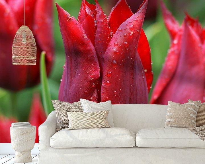 Sfeerimpressie behang: Rode tulp ('Lasting Love') van Peet Romijn