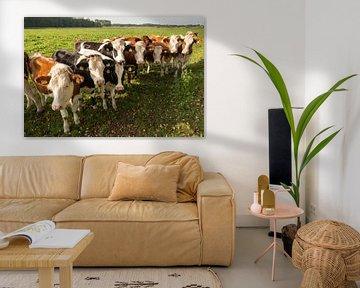 Nieuwsgierige roodbonte koeien in een weiland van Tonko Oosterink