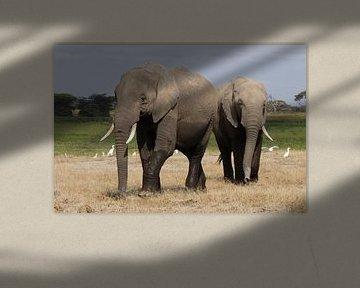 olifanten von Daisy Janssens