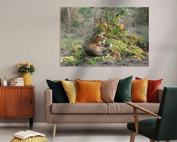 Beispiel: Leeuwen in Kenia von Daisy Janssens