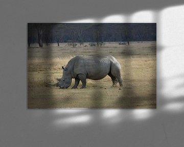 Witte neushoorn von Daisy Janssens