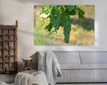 Young wine van Ursula Di Chito