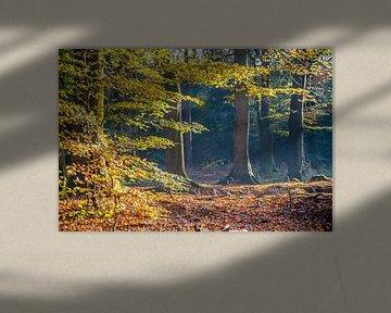 Herfst in het bos 01 van Geertjan Plooijer