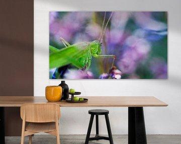 Grasshopper in Spring von Mees Tempelaar