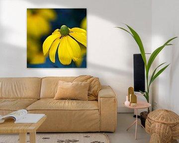 Echinacea geel van Ina Hölzel