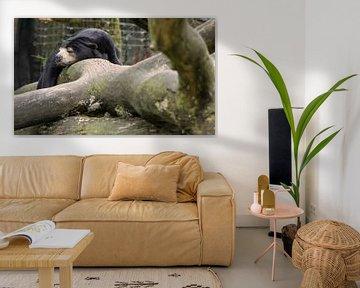 Luie beer van Peter-Paul Timmermans