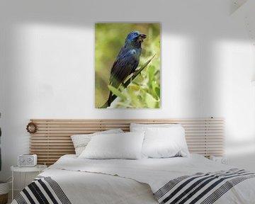 Vogel von Peter-Paul Timmermans