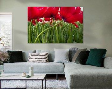 Tulpen van Michael Roubos