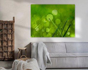 Groen als gras van Anouschka Hendriks