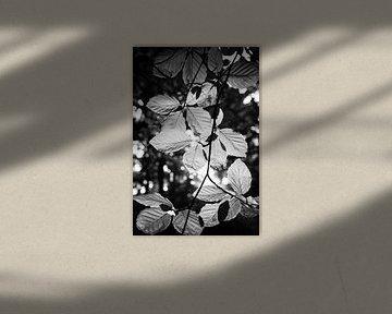 Bladeren van Martijn Kort