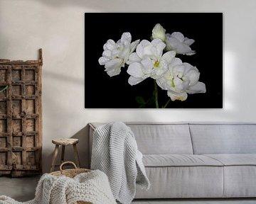 Witte rozenpracht von hetto hettema