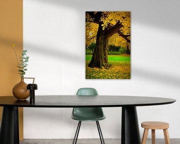 Der alte Ginkgobaum van Ostsee Bilder