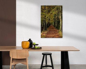 Herfstsfeer in het bos van Bart van Dinten