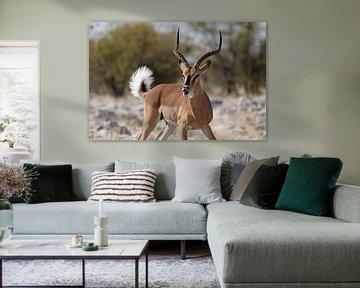 Impala - Etosha National Park van Eddy Kuipers