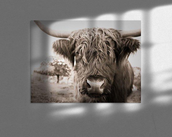 Beispiel: Schottischer Highlander von Jo Beerens