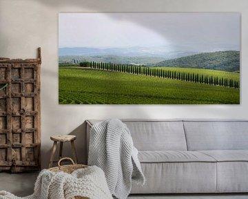 Cipressen tussen de wijnvelden van Barbara Brolsma