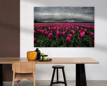 Plankwolk boven een tulpenveld