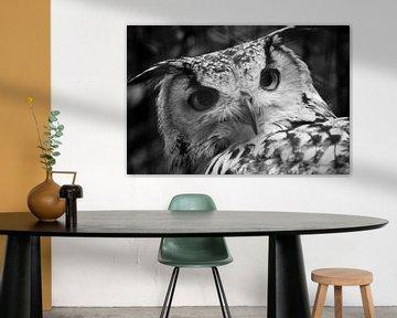 Owl von Margo Smit
