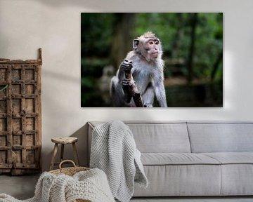 Poserende aap von Niels Boere