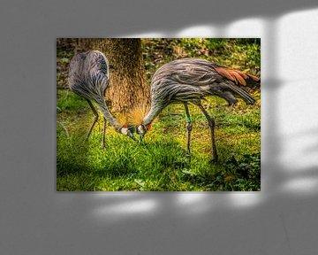 Kraanvogels von Harrie Muis