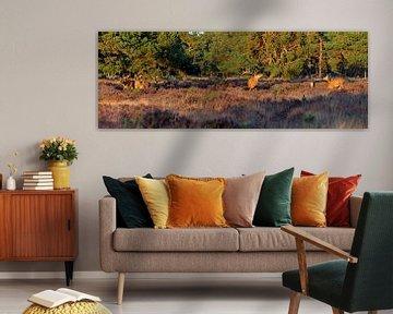 Panorama Red Deer von Anton de Zeeuw