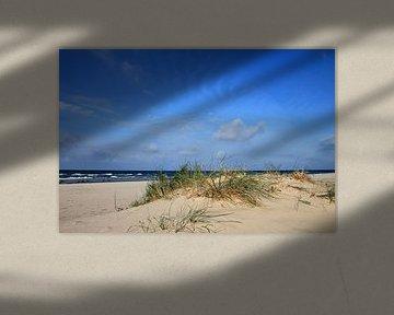 Herbstdünen von Ostsee Bilder