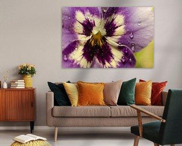 Paarse Orchidee van Christopher Lewis