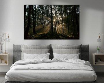 Zonlicht in het donkere bos van Sjoerd van der Wal