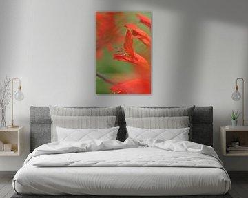 rode bloem van Pyter de Roos