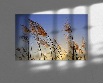 Im Abendlicht van Ostsee Bilder