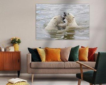 Ours polaires sur Eric Dufour