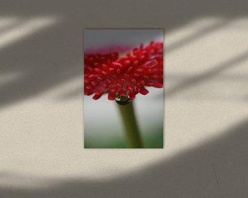 Pink Flower van Joanna van Schoor