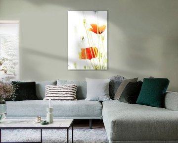 Mohnblumen von Markus Wegner