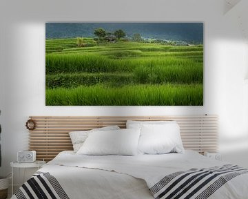 Rijstveld Bali. van Jeannine Van den Boer