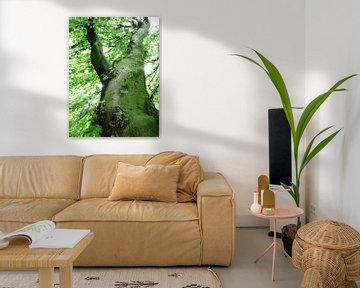 Tree Magic 13 van MoArt (Maurice Heuts)