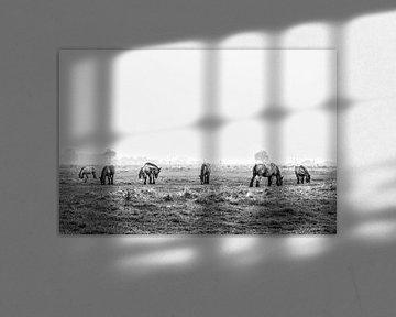 Horses in the polder von Wessel Krul