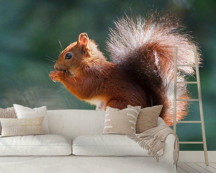 Sfeerimpressie behang: eekhoorn van Pim Leijen