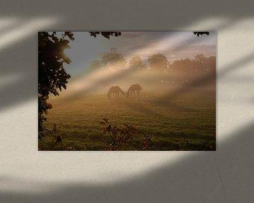 Paarden van Jan Linschoten
