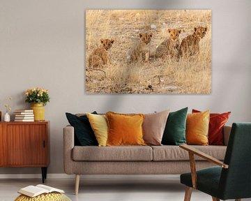 Vier leeuwenwelpjes op rij van Simone Janssen