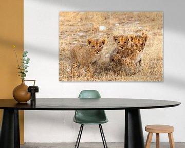 Leeuwenwelpjes kijkend in de camera van Simone Janssen