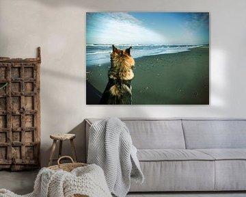 Duitse herder op het strand von Toekie -Art