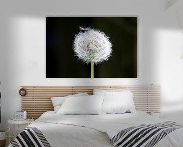 Paardenbloem / Flower von Karin leijen